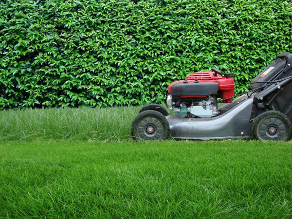 Lawn-mower-smaller